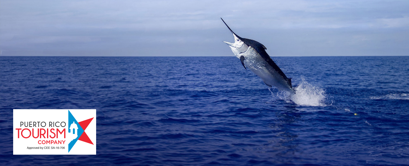 Everything you need to know about fishing tournaments in Puerto Rico